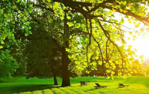 【碧桂园公园雅筑】一座都会公园 驭领城市人居